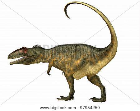 Giganotosaurus Dinosaur Tail