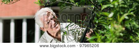 Retired Male Pruning Bush
