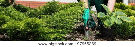 Horticulturist Planting Flower
