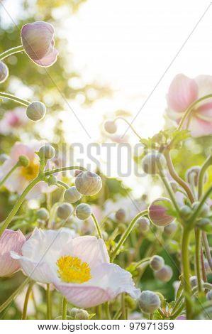white flowers dazzling sunlight