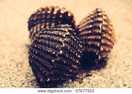 Cardiidae Or Bivalve Shell