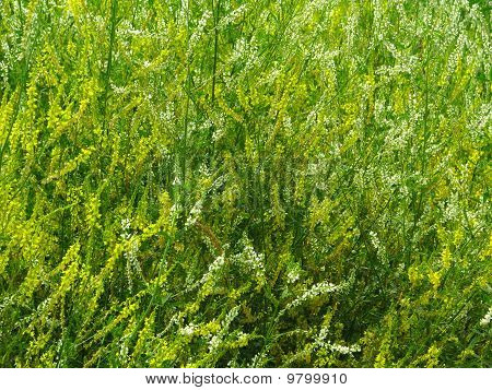 Tangle of the grass