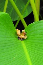 dry leaft