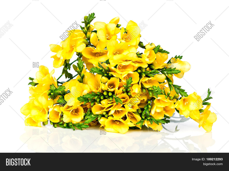 Photo Yellow Freesia Flowers On Image Photo Bigstock