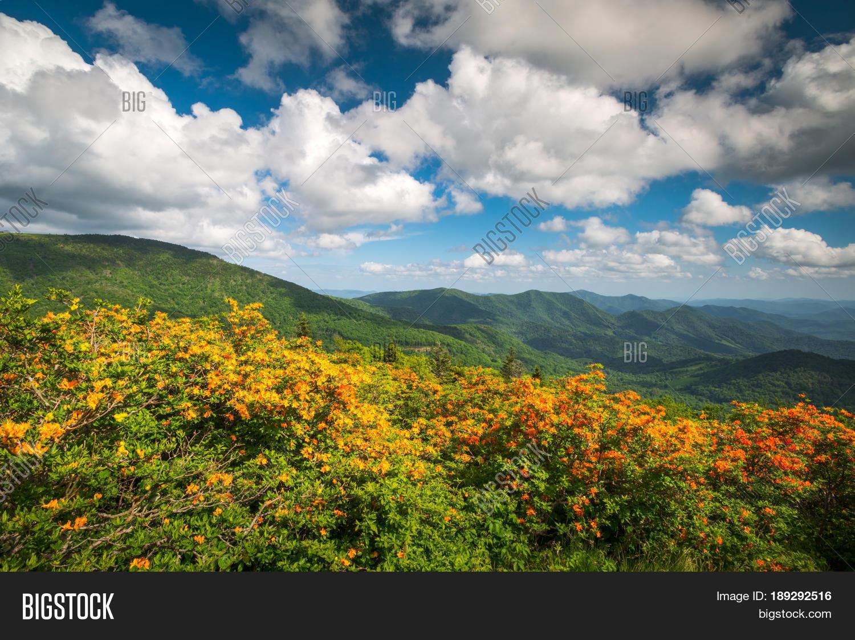 Mountain Flame Azalea Image Photo Free Trial Bigstock