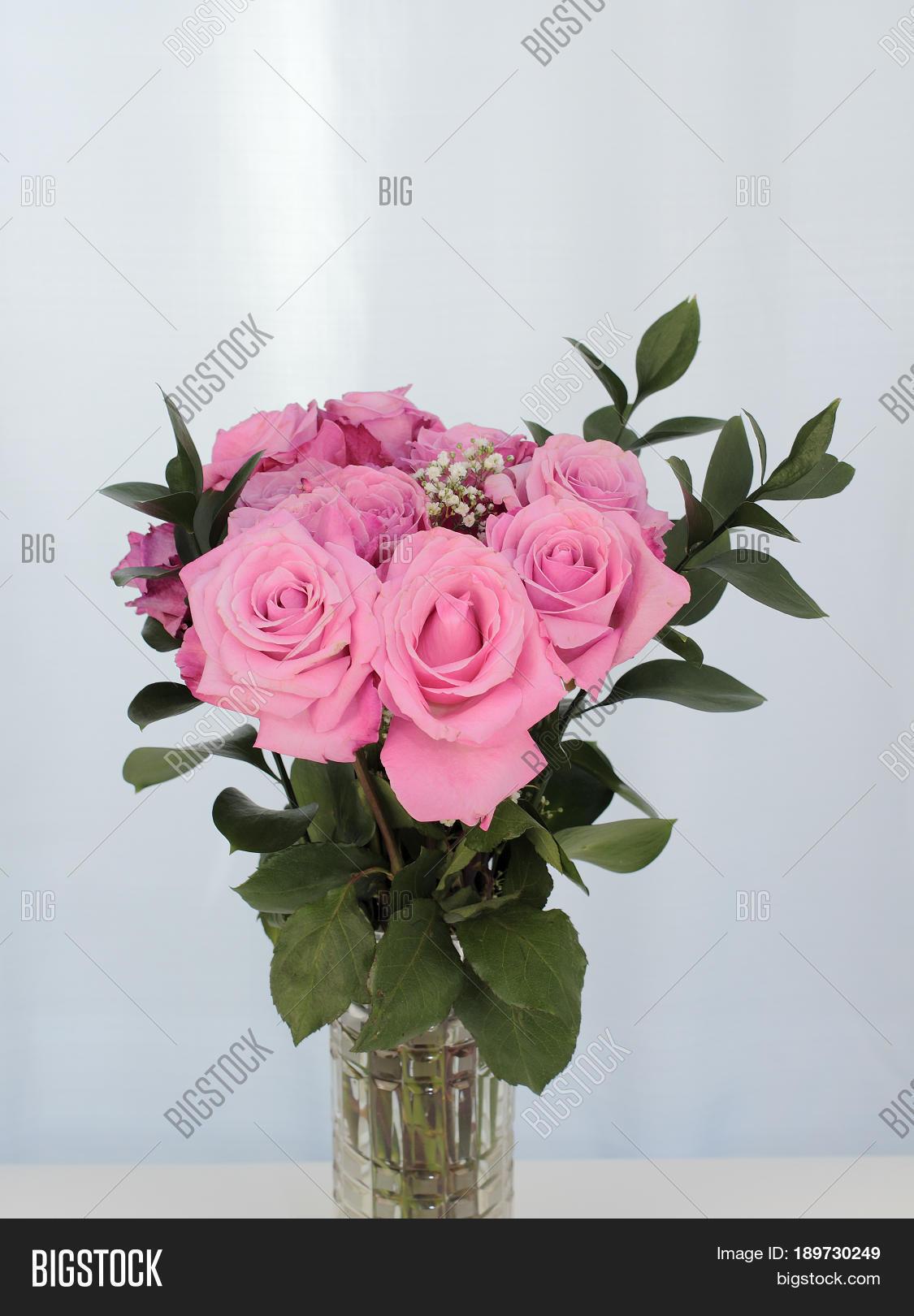 Vibrant Pink Rose Image Photo Free Trial Bigstock