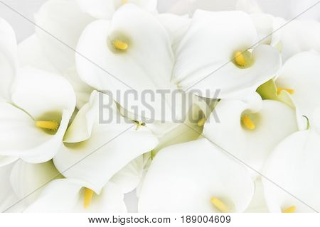 Bouquet of the calla lilies as background