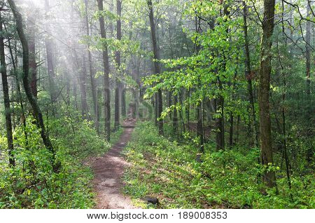 lush green misty forest trail in castle mound pine forest state natural area outside black river falls wisconsin