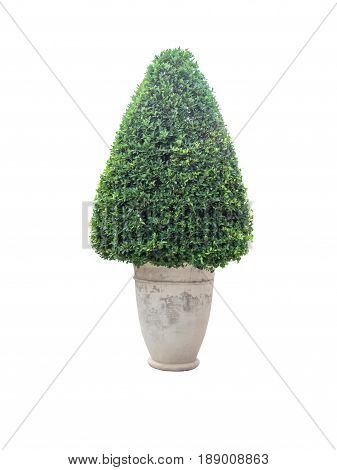 Ornamental plants in potisolated on white background with clipping path.