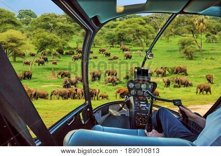 African elephants in Tarangire National Park Tanzania on green grass savanna, Tanzania. Helicopter cockpit with pilot arm and control console inside the cabin.
