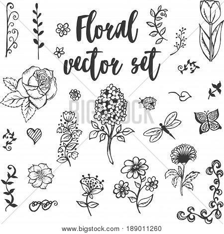 Floral vector set of vintage lines Floral vector set of vintage collection. Floral vintage vector invitation for wedding. Floral Vector Set Vintage