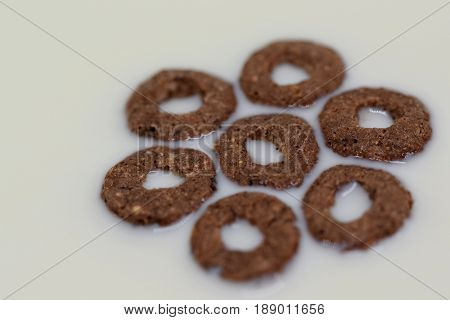 Close view on the  seven chocolate rolls in milk, forming the flower shape, waiting to become a somebody breakfast