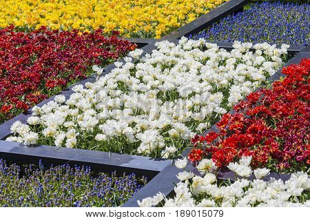 Lots of Colorful Dutch Tilips Placed in split Areas in Garden. Keukenhof National Park. Horizontal Shot