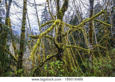 Beautiful fantasy like nature at Hoh Rain Forest
