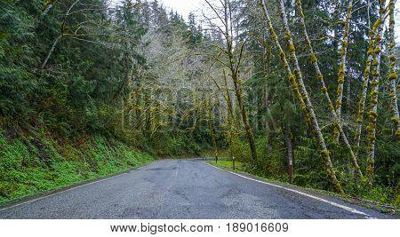 Wonderful scenery at Hoh rain forest - creepy fantasy look