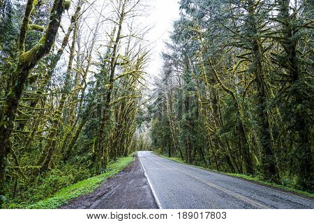 Creepy trees at Hoh Road in the rain forest of Olympic National Park
