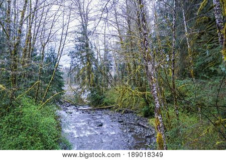 Small creek in the Hoh Rain Forest near Forks