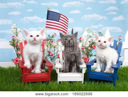 Three kittens sitting in wood chairs red white and blue on green grass white picket fence background with flowers sky flag waving in air. Patriotic baby felines