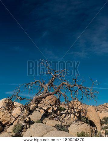 Gnarly Dried Tree On Rocks Below Blue Sky