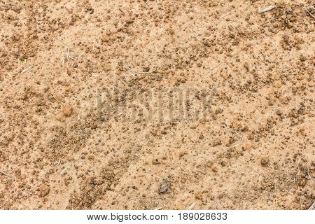 Texture of the soil soil texture nature background cracked ground texture ground brown ground sand texture.