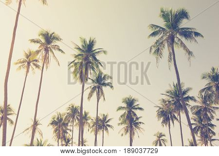 Coconut palm trees at the island looking up angle - vintage tone