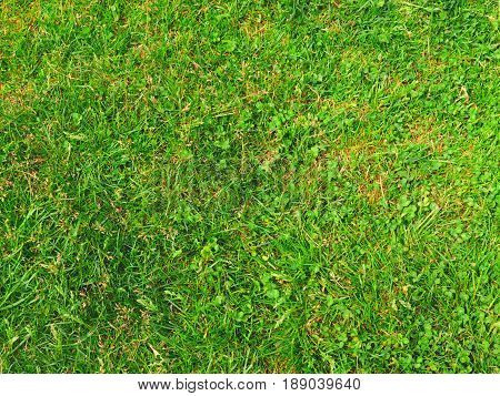 Green Grass Background. Horizontal gree yard texture