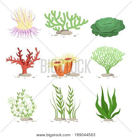 Vector set of underwater plants. Funny illustrations in cartoon style isolate on white. Underwater plant, ocean and sea plant for aquarium