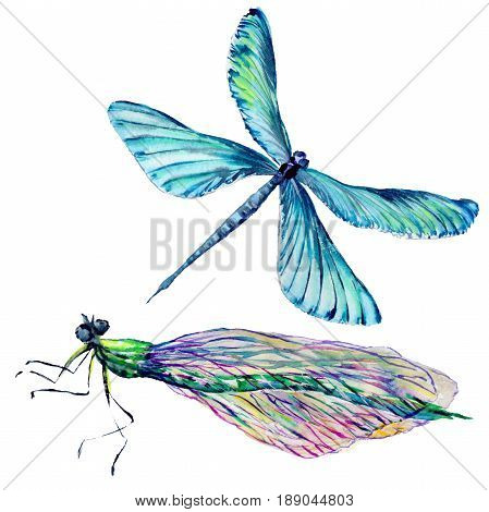insect dragonfly set in a watercolor style isolated. Aquarelle dragonfly for background, texture, wrapper pattern, frame or border.