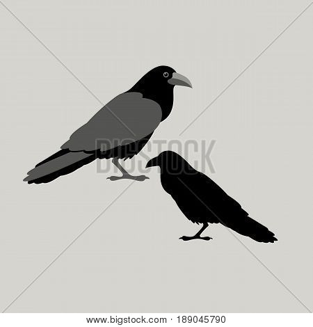 raven bird vector illustration style Flat silhouette