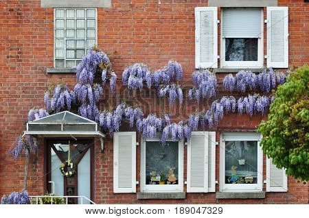 Burgstall (Murr), Baden-Wurttemberg, Germany - April 19 2017: Red brick building with white windows and wisteria plants on the facade.