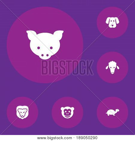 Set Of 6 Zoology Icons Set.Collection Of Hog, Lamb, Wildcat And Other Elements.