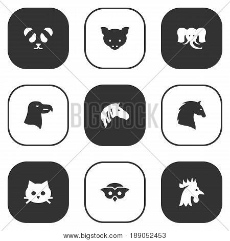 Set Of 9 Zoo Icons Set.Collection Of Night Fowl, Trunked Animal, Horse And Other Elements.