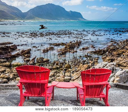 African penguins among coastal stones. Two armchairs chaise longue by Atlantic ocean. Boulders Penguin Colony in the Table Mountain National Park, South Africa. The concept of ecotourism