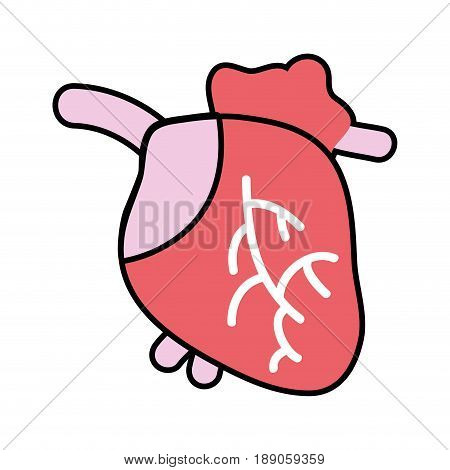 heart organ with blood circulation for the veins vector illustration