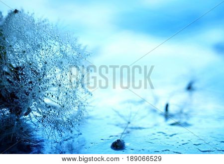 Abstract background with dandelion blowing in dew drops macro image blue toned photo selective focus