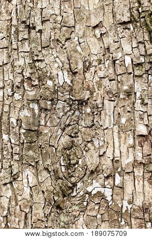 Close up of bark of tree trunk