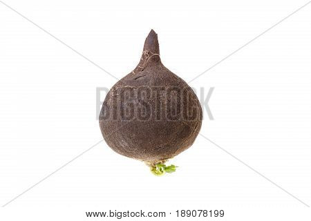 Black Radish With Green Leaf