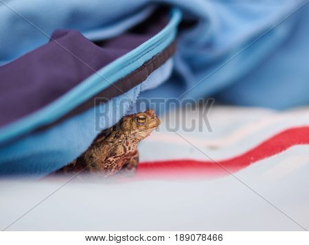 A frog hides under a jacket on a picknick cloth