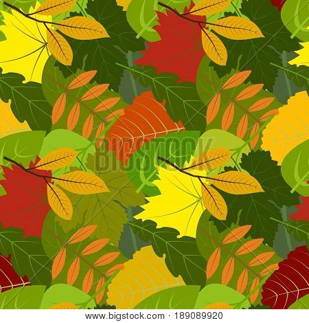 Seamless pattern colorful autumn leaves, vector illustration