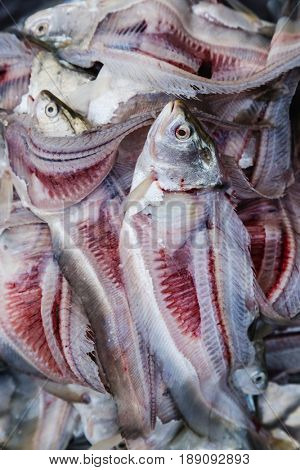 Close up of cleaned fish for sale