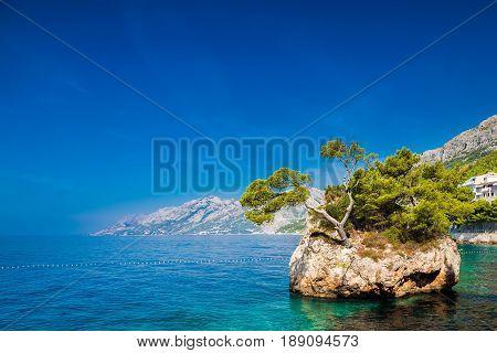 the rock with growing pine near Punta Rata beach in Brela Makarska Riviera Croatia