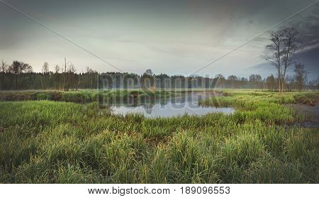 A sad landscape of the morning nature on  bank of the river against a background of dark forest with fog in the distance. The gray tones of the sky, grass, small lake create a melancholy atmosphere.