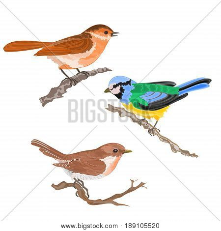 Singing birds on branches warbler titmouse sparrow vintage hand draw set one vector animals illustration for design