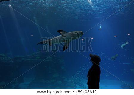 Aquarium on the Red Sea in Eilat