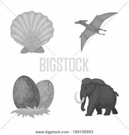 Prehistoric shell, dinosaur eggs, pterodactyl, mammoth. Dinosaur and prehistoric period set collection icons in monochrome style vector symbol stock illustration .