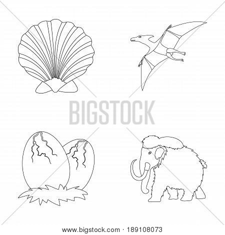 Prehistoric shell, dinosaur eggs, pterodactyl, mammoth. Dinosaur and prehistoric period set collection icons in outline style vector symbol stock illustration .