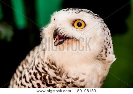 owl night bird in the forest, dark animal