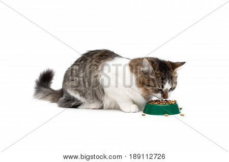 Fluffy cat eating dry food on a white background. Horizontal photo.