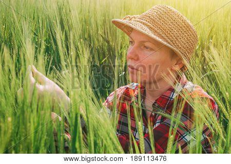 Female farmer examining barley crop ears farm worker controls plant development