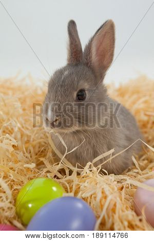 Easter eggs and Easter bunny in the nest against white background
